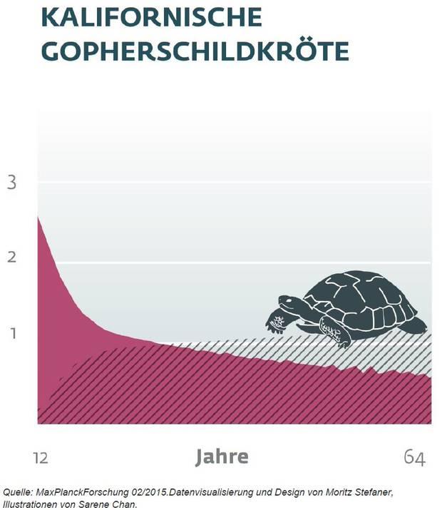 Lebenserwartung Schildkröte