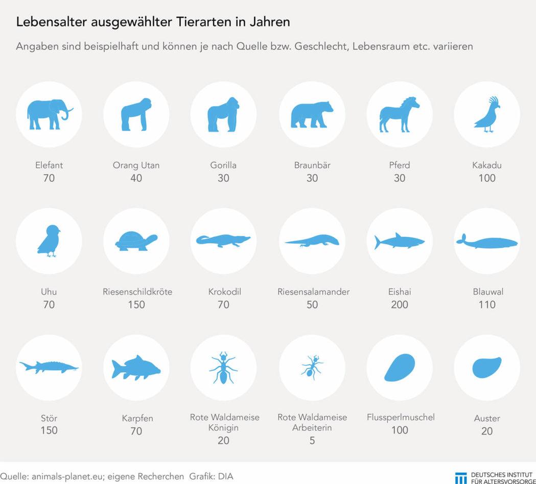 Lebenserwartung bei Tieren
